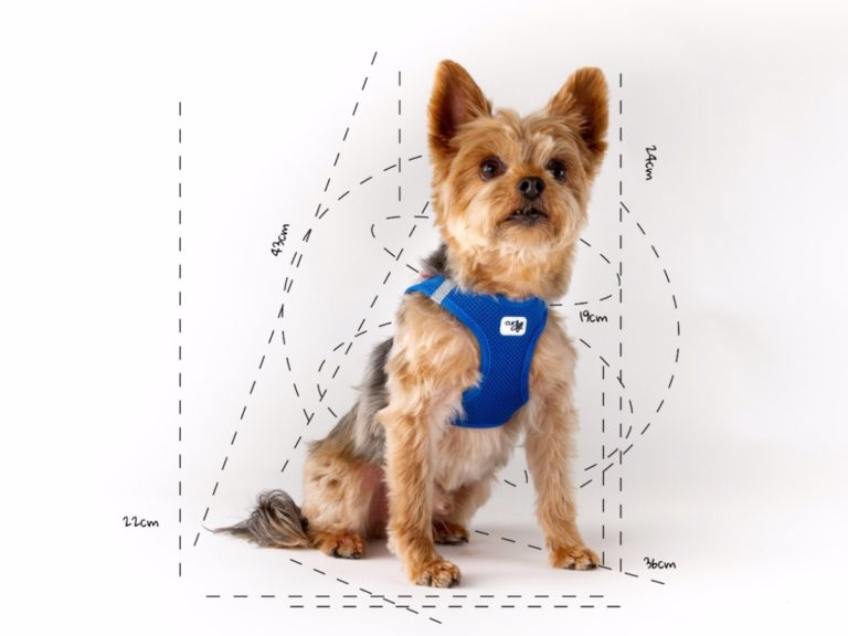 measure a dog